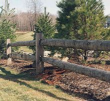 A wooden fence sits on one side of a group of pine trees