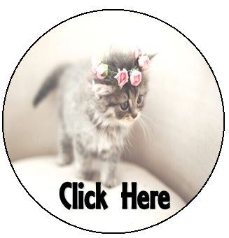 Click to see adoptable cats