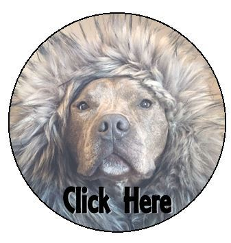 Click to see adoptable dogs
